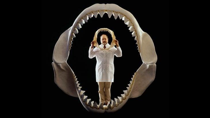 Mandíbula de megalodón vs. tiburón blanco