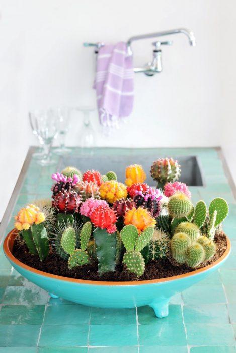 miniterrario colorido de cactus