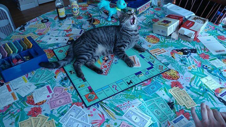 gatito monopoly