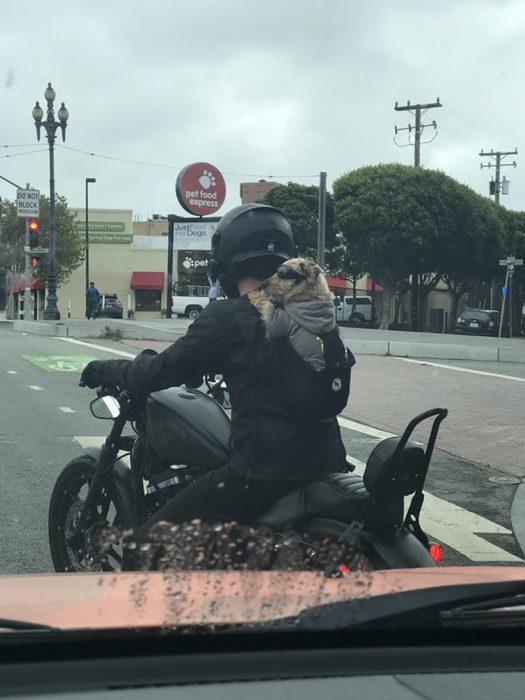 Perrito motociclista renegado