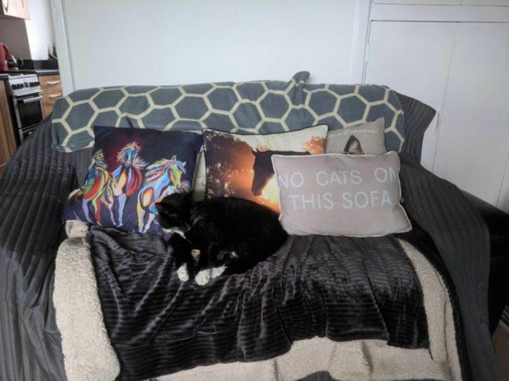 gatito anarquista