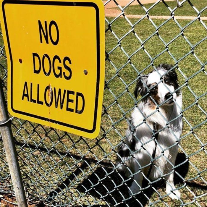 no se permiten perros