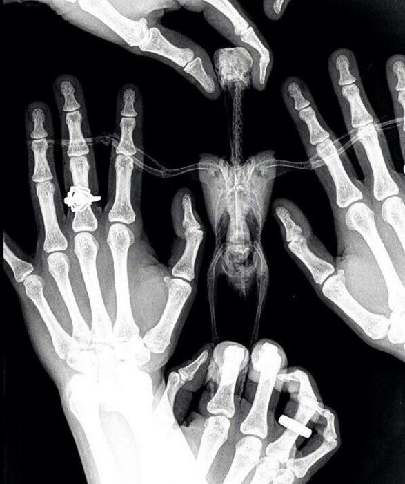 rayos x de pájaro