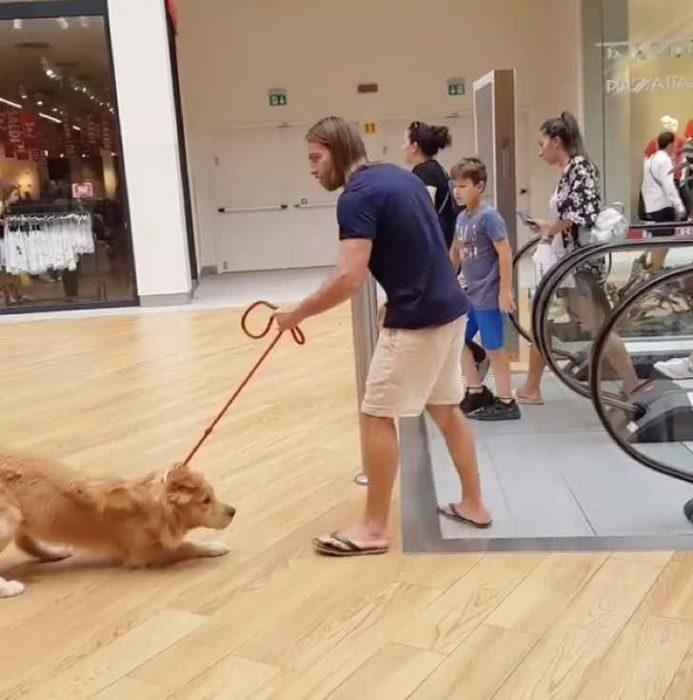 perro escaleras eléctricas recreoviral.com