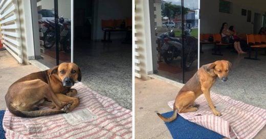 Cover Perro fiel lleva cuatro meses esperando a su dueño en el hospital sin saber que ya falleció