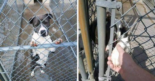 Cover Perrito de un refugio sabía que iba a ser sacrificado