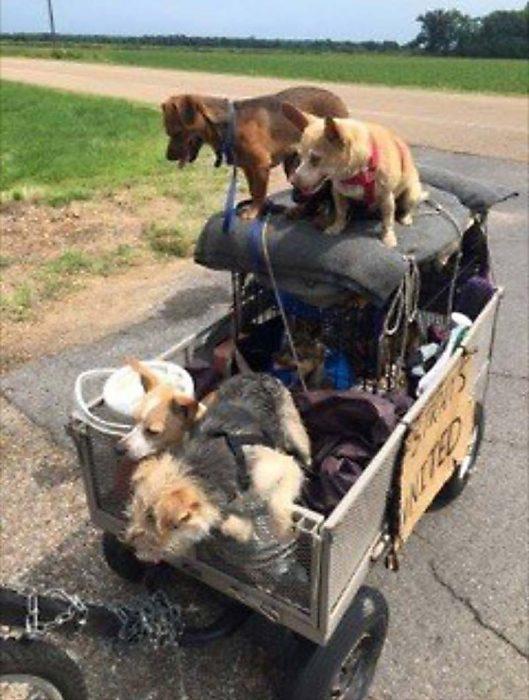 perritos en carrito especial