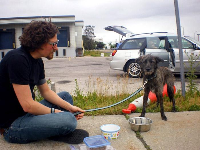 perritos conocieron a sus dueños