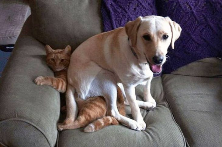 perro sentado en gato