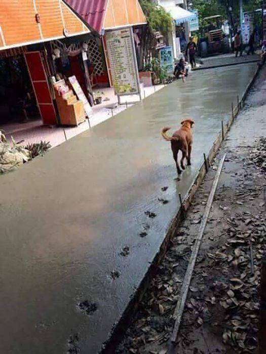 perrito malvado