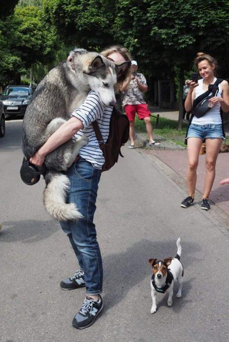 Perritos husky recreoviral.com