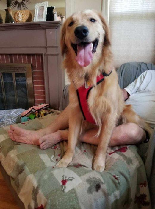 perrito con piernas de hombre