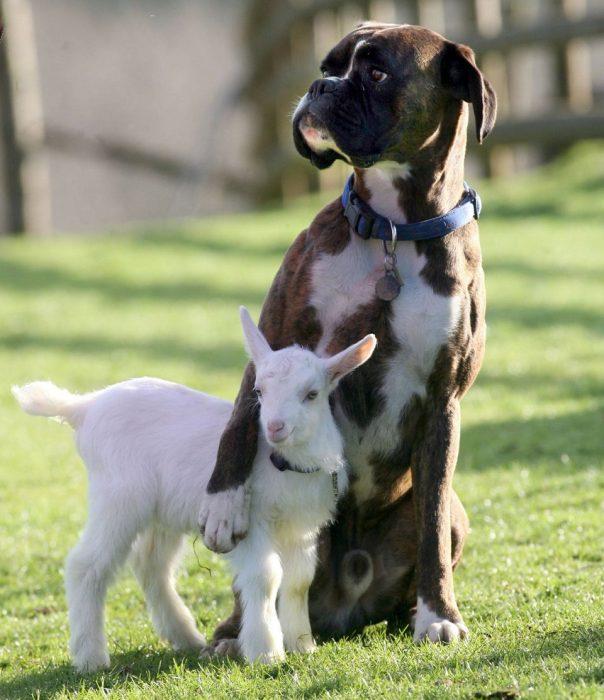 perrito y cabra abrazados