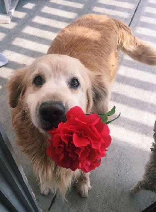 perrito con una flor en su hocico
