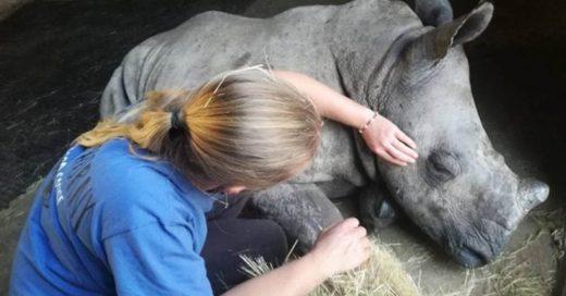 Cover bebé rinoceronte llora por su madre