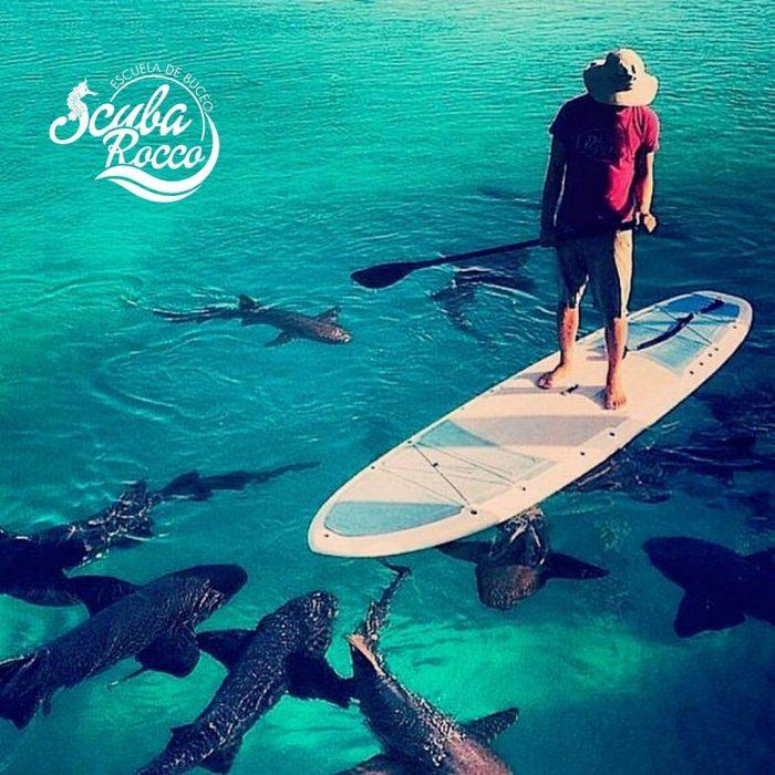 paddle board con los tiburones