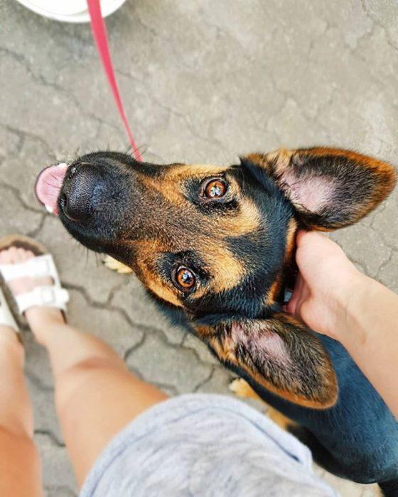 mirada de perrito tierno