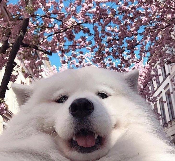 perrito guapo