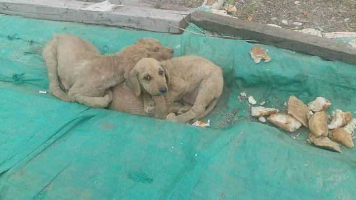 fotos de perritos en las calles de turquia