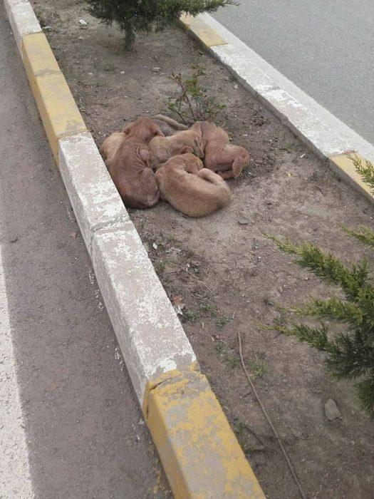 perritos abrazados en la calle