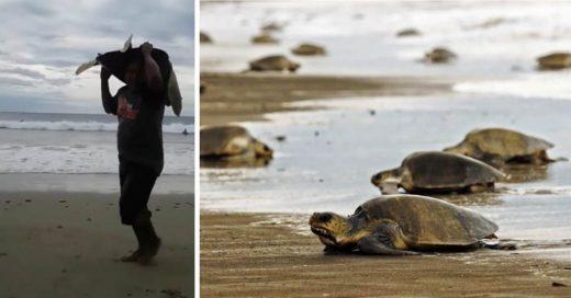 Cover Crueles cazadores furtivos roban tortugas en la playa de Nicaragua