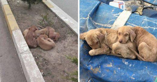 Cover Cachorritos abandonados se abrazan para protegerse unos a otros