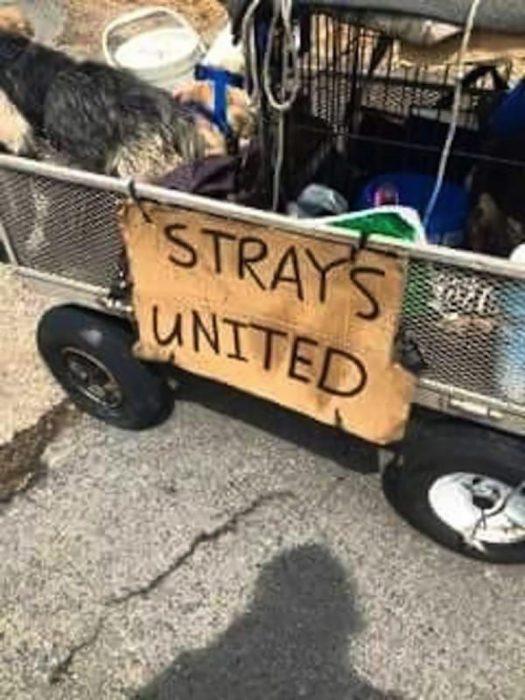 carrito de perros callejeros
