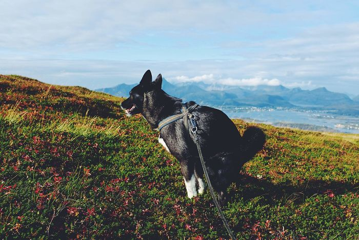 Calendario de perros haciendo popo