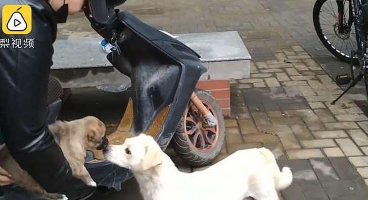 Perra se despide por última vez de su cachorro