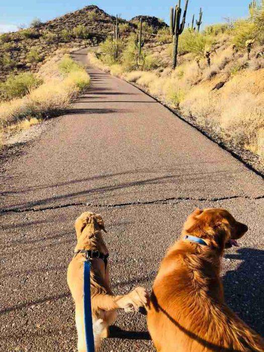 Perro salva a su dueña de mordedura de serpiente