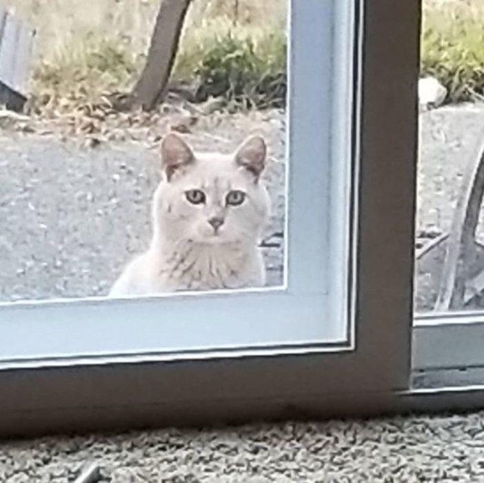Gato asomado en la ventana