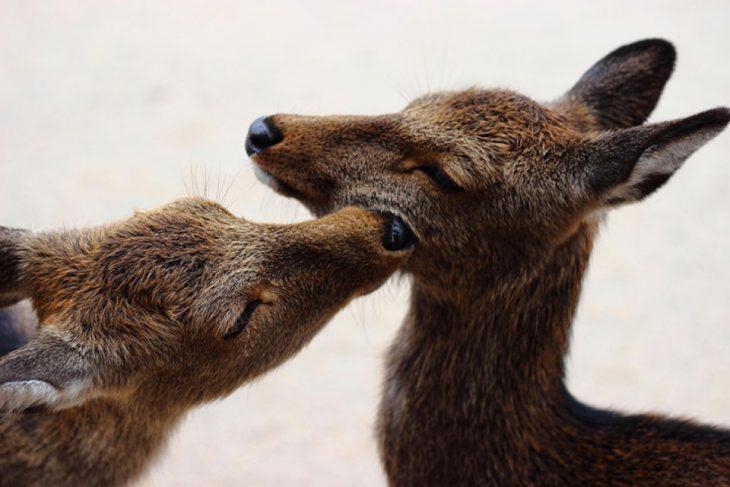 animales besándose