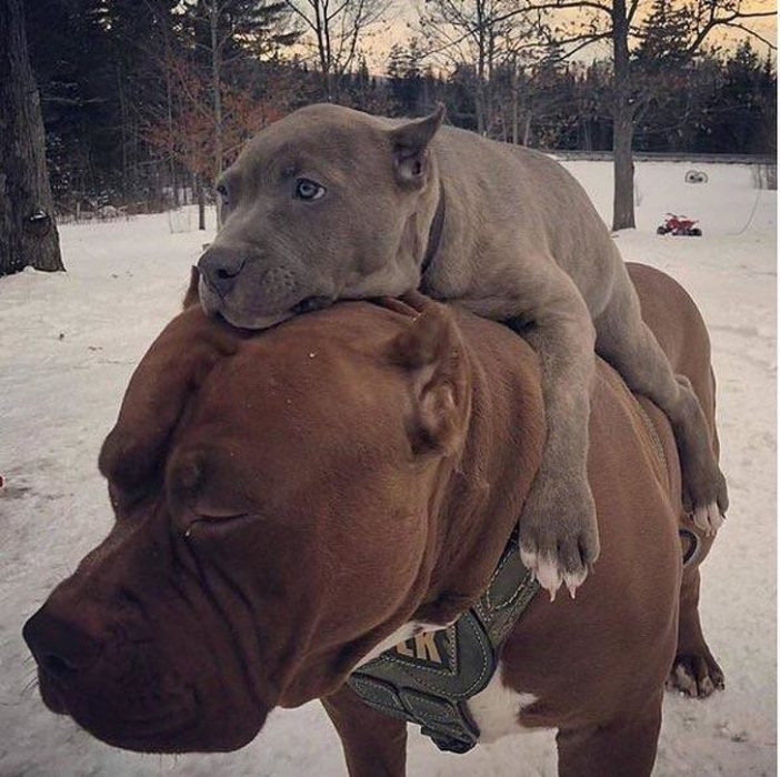 animales cuentan historias sin hablar