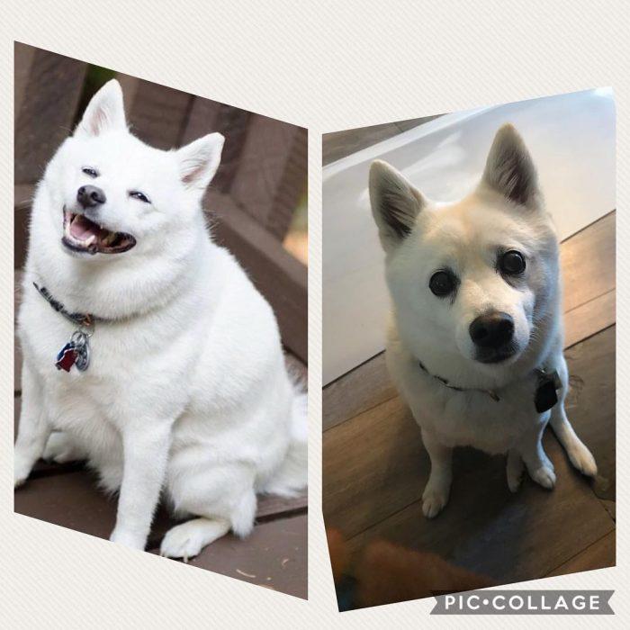 animales que perdieron peso
