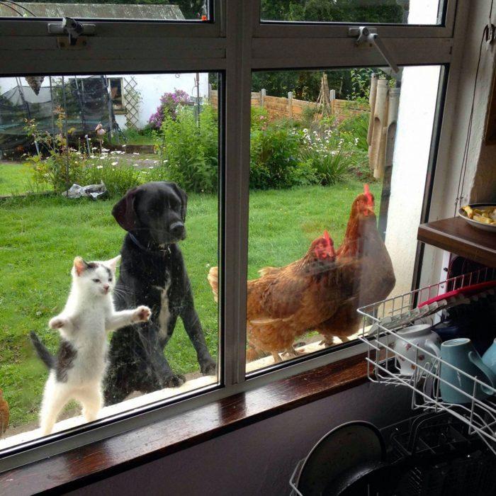 animales quieren entrar a casa