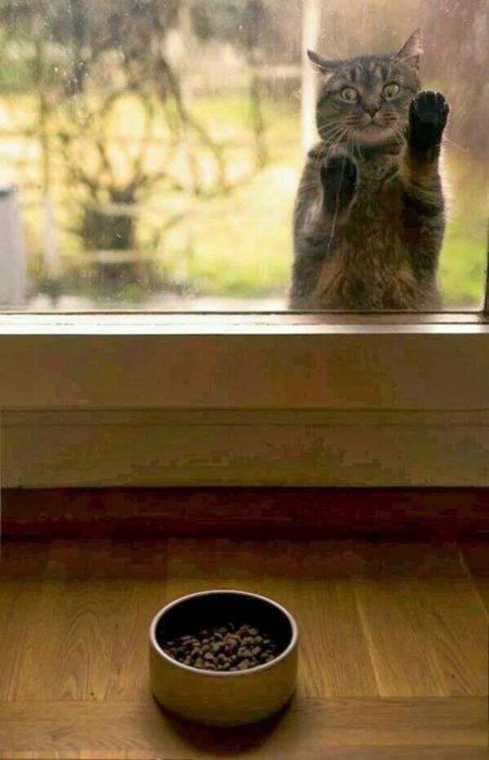 animales que quieren entrar a casa