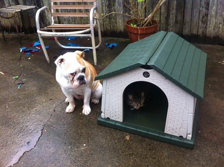 gato le roba la casa a perro