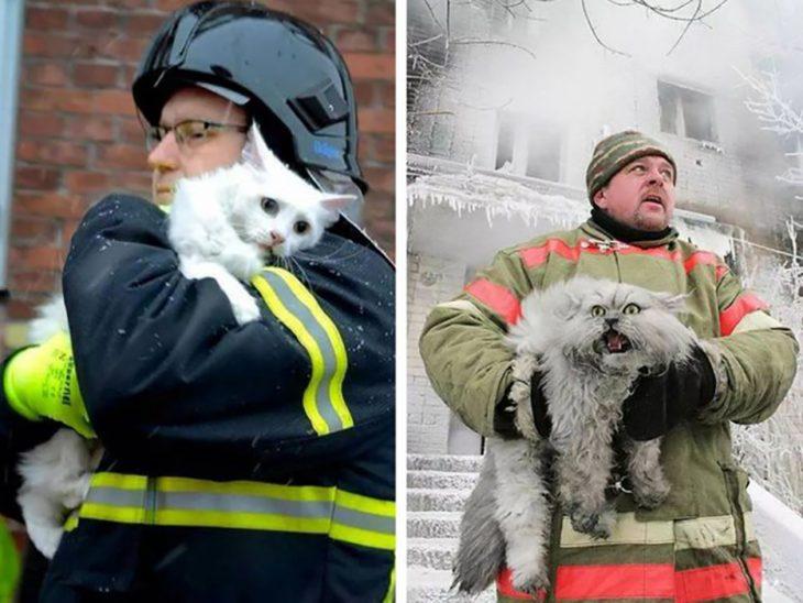 dos gatos rescatados de un incendio