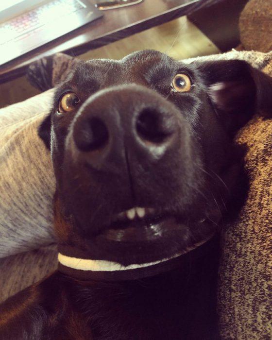 cara graciosa perrito