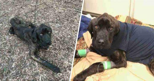 Cover Rescatan a perro a punto de morir de hambre