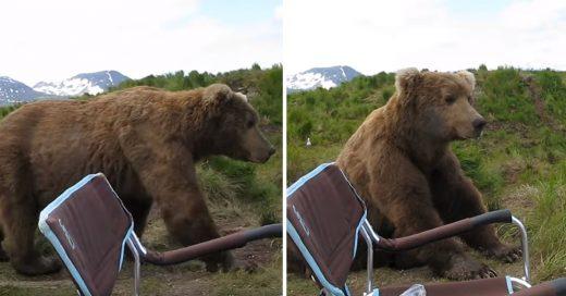 Cover Un oso pardo decidió contemplar el atardecer junto a un campista en Alaska