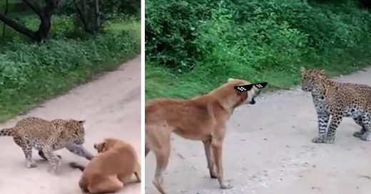 Cover Perro con agallas enfrenta a un leopardo salvaje