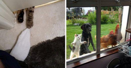 Cover Animales Que Quieren Que Los Dejen Entrar A Casa
