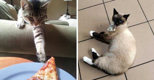 Cover Gatos ladrones sorprendidos en la escena del crimen