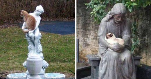 Cover Imágenes que demuestran que los felinos aman a las esculturas