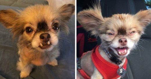 Cover Chewie, perrito adoptado es famoso en Instagram gracias a su fealdad