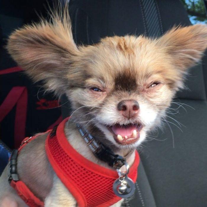 perrito tierno porque es feo