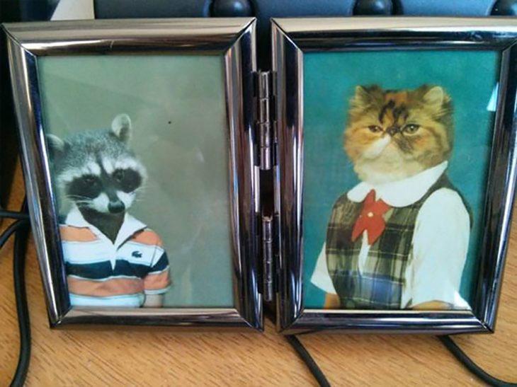 fotos de gatos y mapache