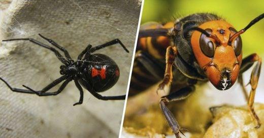 Cover Las picaduras de insecto más letales del planeta