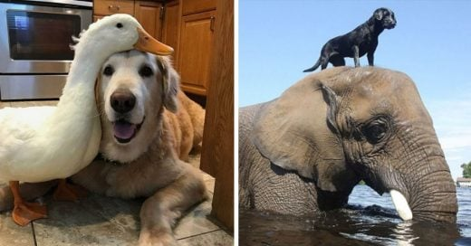 Cover Inusuales y conmovedoras historias de amistad en el reino animal